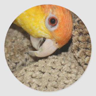 Peek-a-Boo Parrot Caique Round Sticker