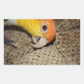 Peek-a-Boo Parrot Caique Sticker