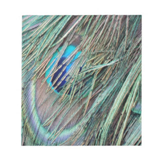 Peek a Boo Peacock Feathers Notepad