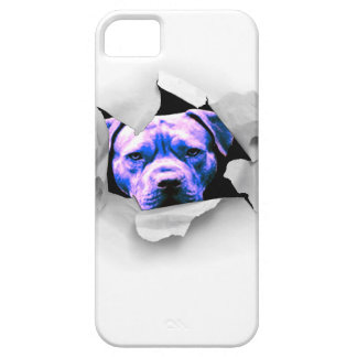 Peek A Boo Pit Bull iPhone 5 Cover