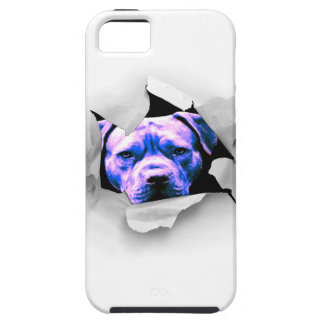 Peek A Boo Pit Bull iPhone 5 Case