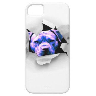 Peek A Boo Pit Bull iPhone 5 Cover