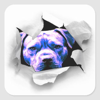 Peek A Boo Pit Bull Square Sticker