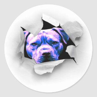 Peek A Boo Pit Bull Round Sticker