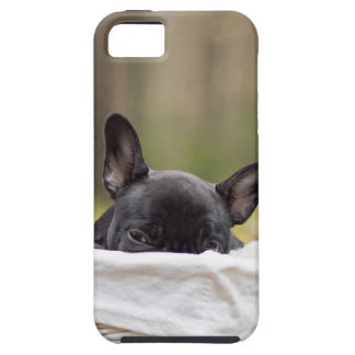 Peek-A-Boo Puppy iPhone 5/5S Cases