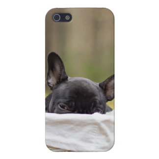 Peek-A-Boo Puppy iPhone 5 Cases