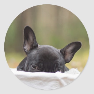 Peek-A-Boo Puppy Round Sticker