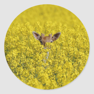 Peek a boo round sticker