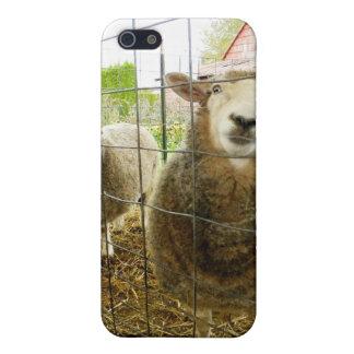 Peek a Boo Sheep iPhone 5/5S Case