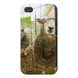 Peek a Boo Sheep iPhone 4/4S Cover
