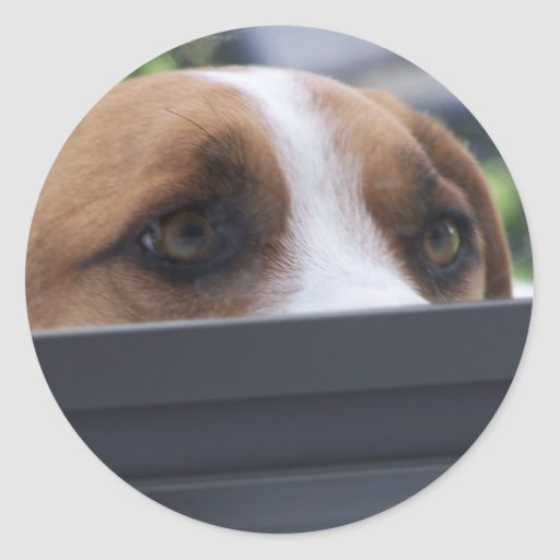 Peek-A-Boo Sticker