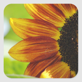 Peek A Boo Sunflower Sticker