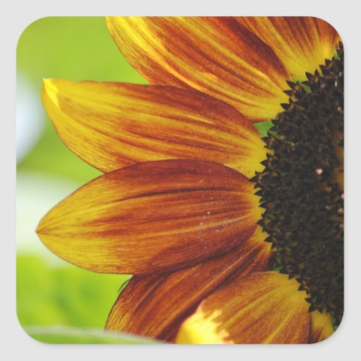 Peek A Boo Sunflower Sticker