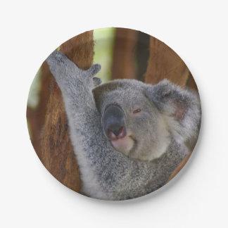 Peekaboo Koala Plate 7 Inch Paper Plate