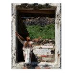 Peeking donkey