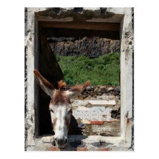 Peeking donkey postcard
