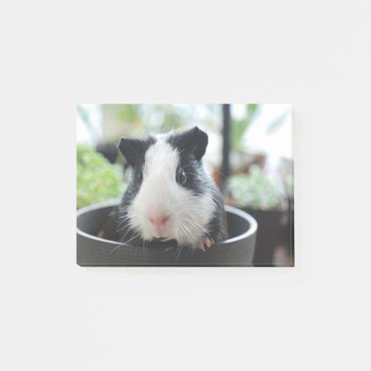 Peeking Guinea Pig Post-it Notes