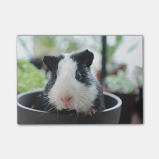 Peeking Guinea Pig Post-it® Notes