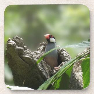 Peeking Java Sparrow Beverage Coasters