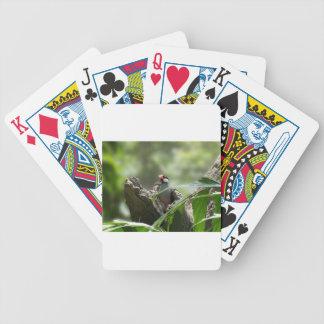Peeking Java Sparrow Card Decks
