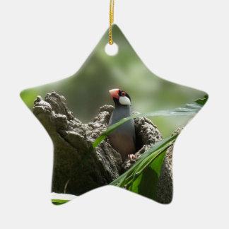Peeking Java Sparrow Ceramic Star Decoration