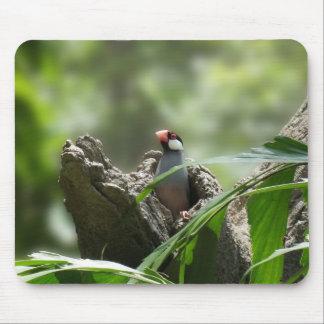 Peeking Java Sparrow Mousepad