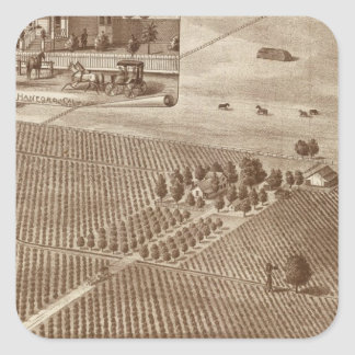 Peerless Vineyard, Hanford, Cal Square Sticker
