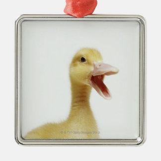 Pekin duck chick, head-shot Silver-Colored square decoration