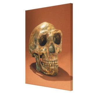 Peking Man's reconstructed skull Canvas Print