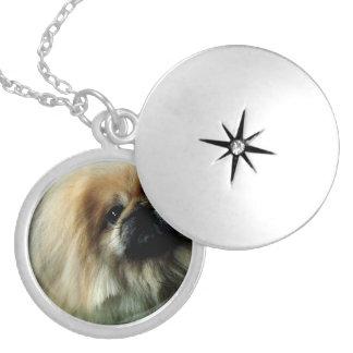 pekingese-15.jpg round locket necklace