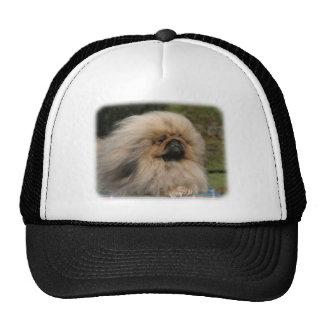 Pekingese 9Y201D-079 Hat