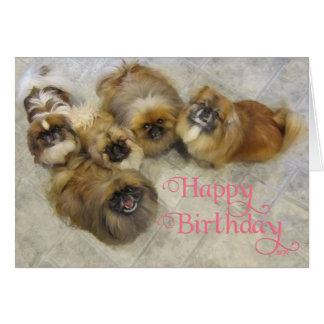 Pekingese Birthday Greeting Card