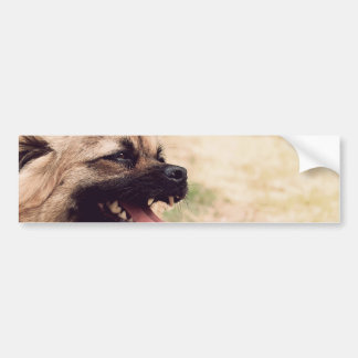 Pekingese Bumper Sticker