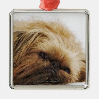 Pekingese dog, close up christmas ornament