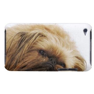 Pekingese dog, close up iPod touch cases