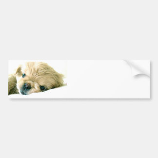 Pekingese Puppies Bumper Sticker