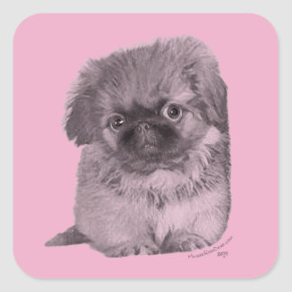Pekingese Puppy on Pink Square Sticker