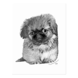 Pekingese Puppy Post Card