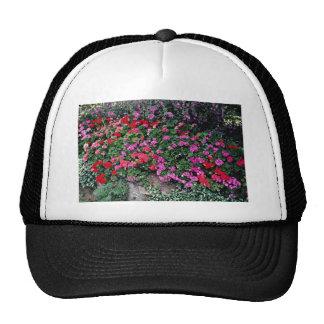 Pelargonium bed flowers hat