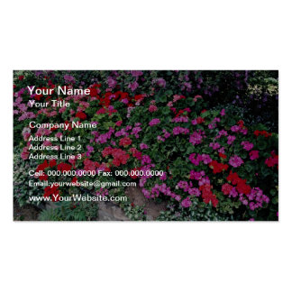 Pelargonium bed  flowers pack of standard business cards
