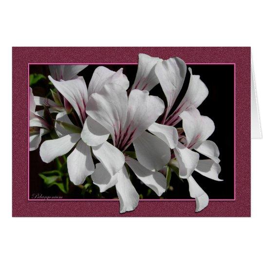 Pelargonium Card
