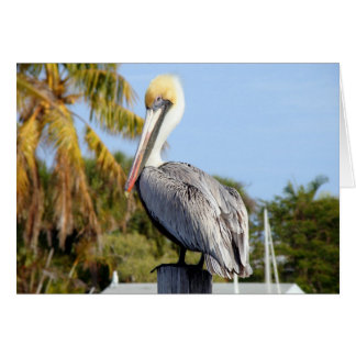 Pelican at Jug Creek Cards