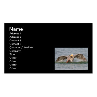 Pelican Bath Time Pack Of Standard Business Cards