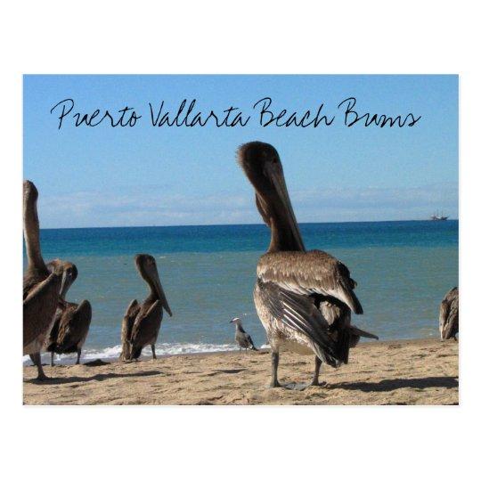 Pelican Beach Bums Postcard