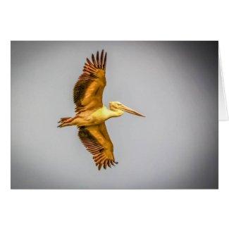 Pelican Bird Greeting Card