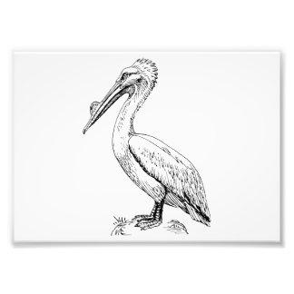 Pelican Bird Illustration Art Photo