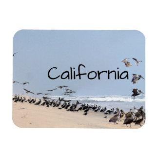 Pelican Birds Wildlife Animals Beach Magnet