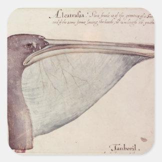 Pelican, c.1590 square sticker