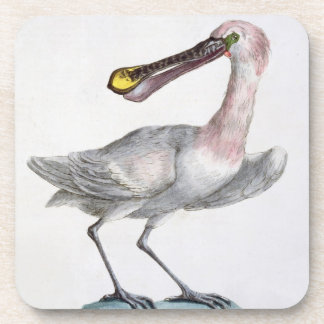 Pelican, c.1767-76 (hand coloured engraving) coaster