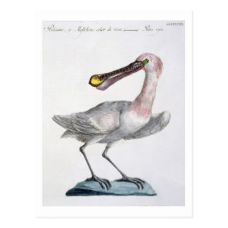 Pelican, c.1767-76 (hand coloured engraving) postcard
